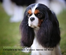 Cavalier King Charles Spaniels: Around The Rings - Arts & Photography photo book