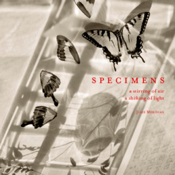 View Specimens - Small Square Softcover by Julie Meridian