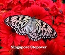 Singapore Stopover, as listed under Travel