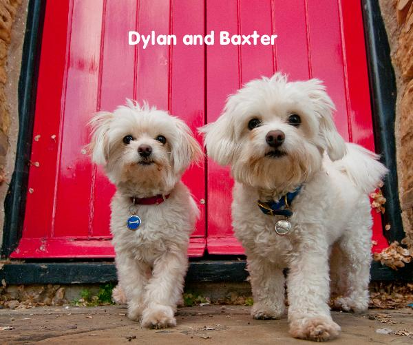 Click to preview Dylan and Baxter photo book