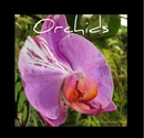 Orchids, as listed under Arts & Photography