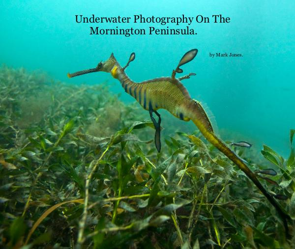 View Underwater Photography On The Mornington Peninsula. by Mark Jones.