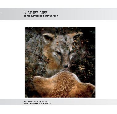 Click to preview A Brief Life photo book