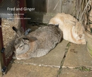 Fred and Ginger - Pets photo book