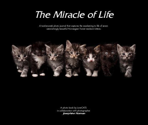 View The Miracle of Life by LoveCATS in collaboration with photographer Josephine Norman