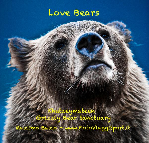 View Love Bears by Massimo Basso - www.FotoViaggiSport.it
