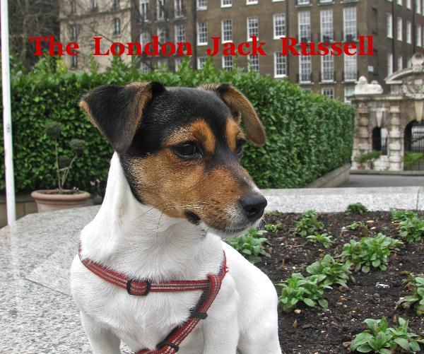 View The London Jack Russell by Anthony Falla