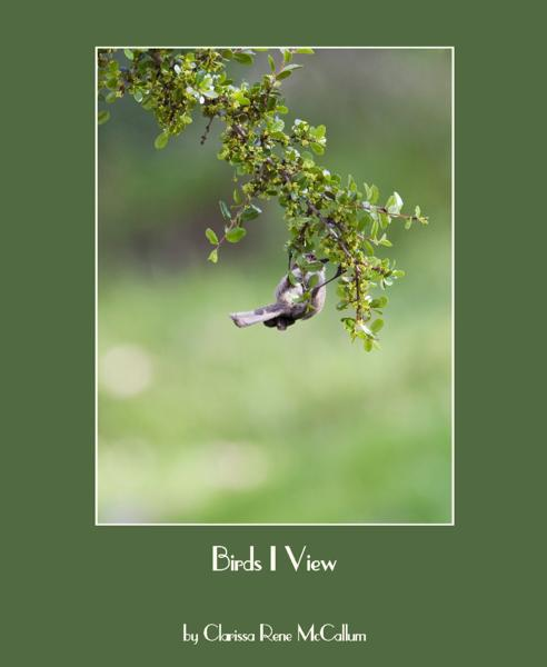 Click to preview Birds I View photo book
