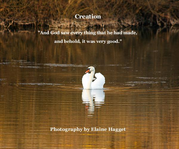 "Haga clic para obtener una vista previa Creation ""And God saw every thing that he had made, and behold, it was very good."" Photography by Elaine Hagget libro de fotografías"