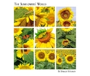 The Sunflowers' World, as listed under Fine Art Photography